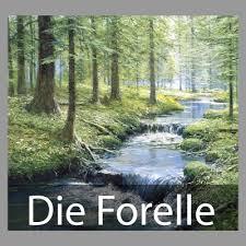 die_forelle